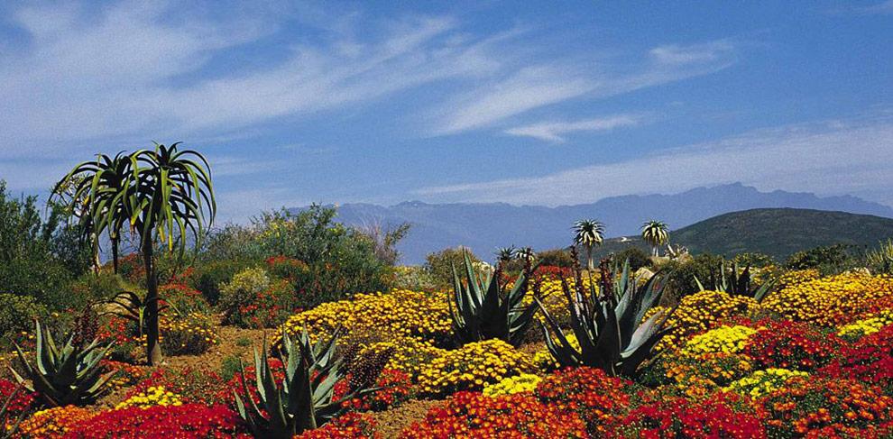 Cape Town Sudafrica kirstenbosch