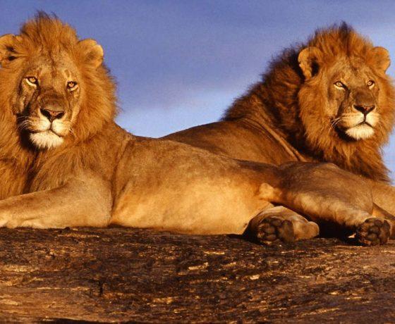 moremi_safari_botswana