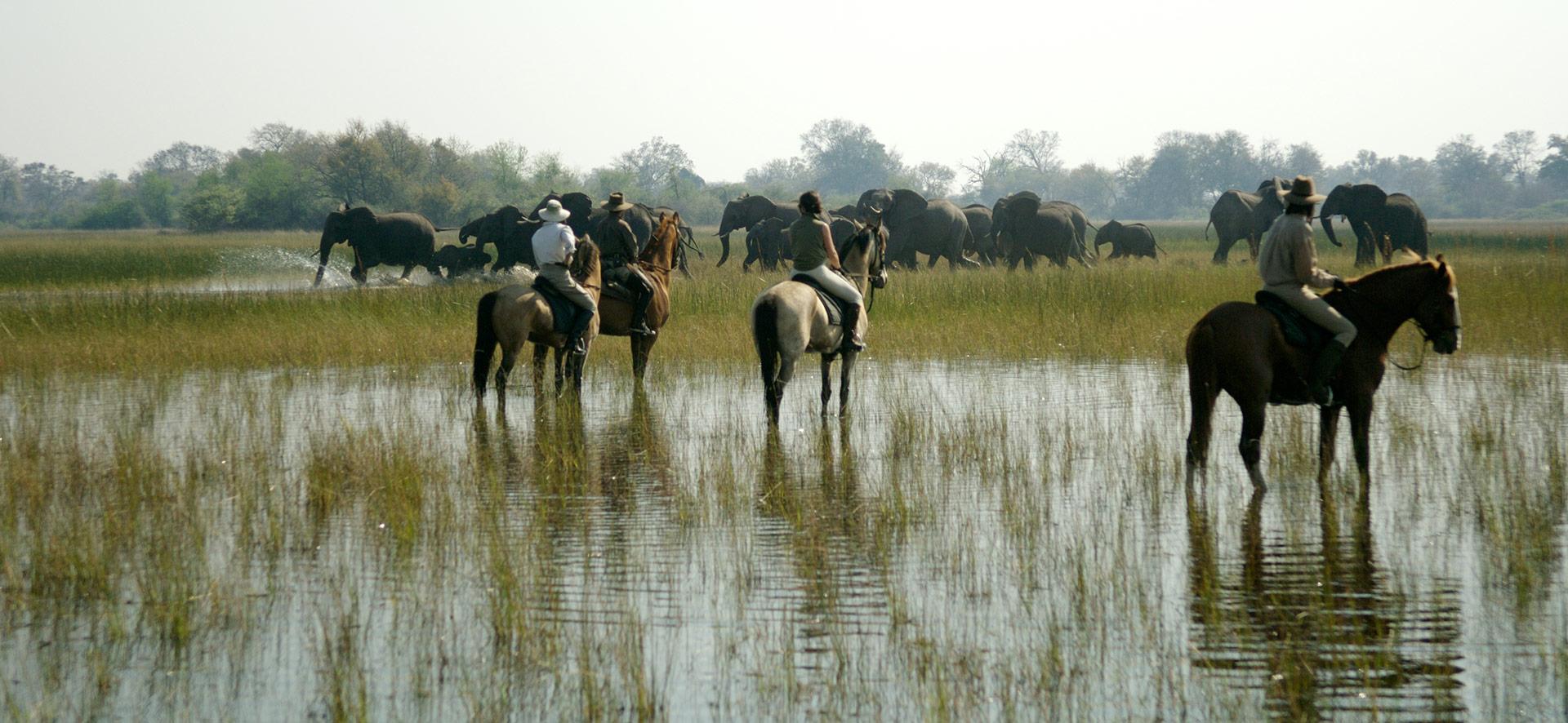 Okavango a cavallo.