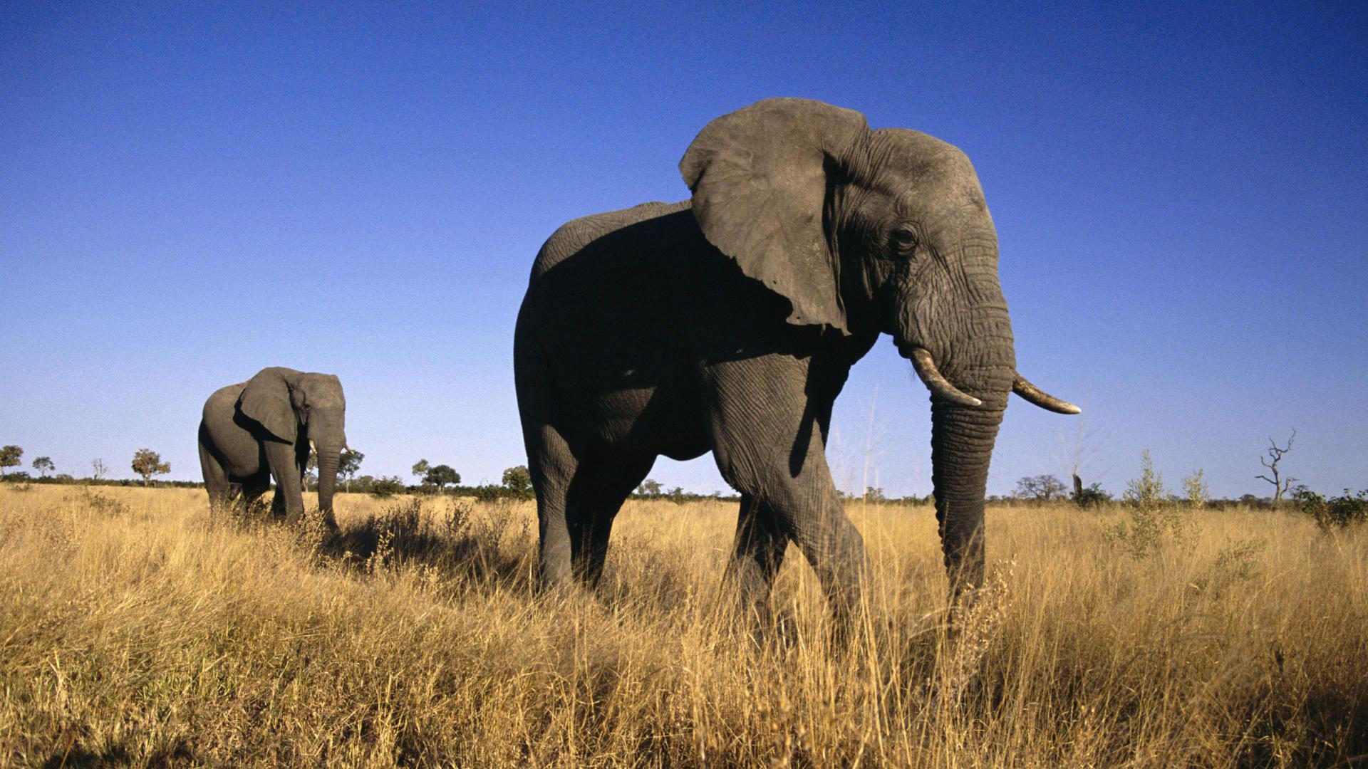 elefanti_moremi