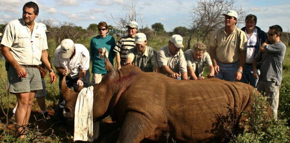 vet safari