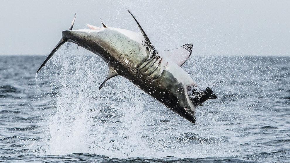 Air Whale Tours Oregon