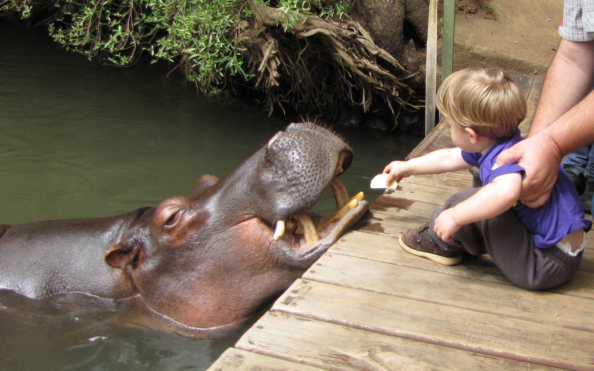 jessica hippo