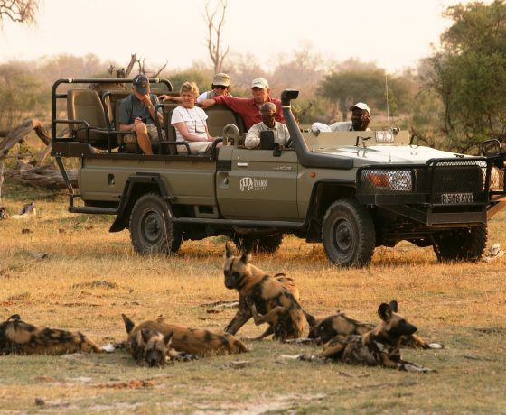 kwando safari wild dog
