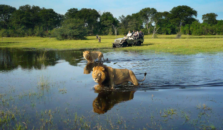 kwara camp safari