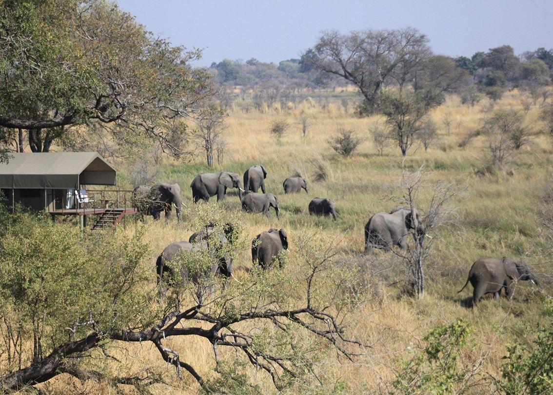 elefanti nkasa lupala