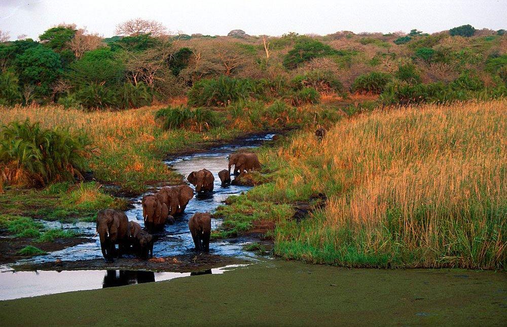 Tembe_Elephant_Park_sudafrica