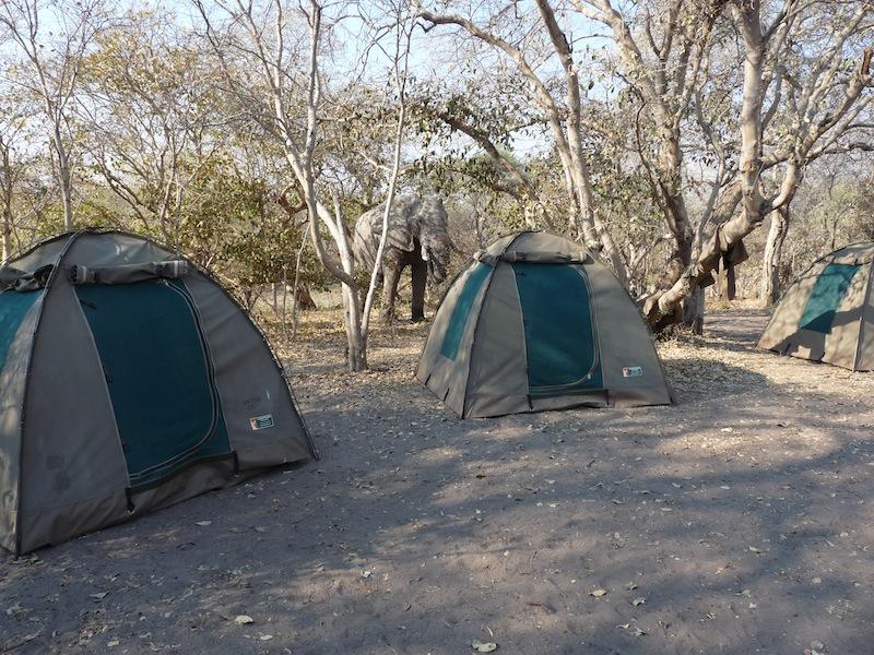 low-cost safari